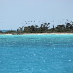 Magnificent Frigatebirds over Bird Key, Dry Tortugas, FL - 2012-04-25