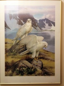 gyrfalcons by Roger Tory Peterson in RTPI - Jamestown NY