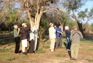 700+ club looking at Northern Beardless Tyrannulet - Bentsen Rio Grande SP - near McAllen TX -2012-12-06