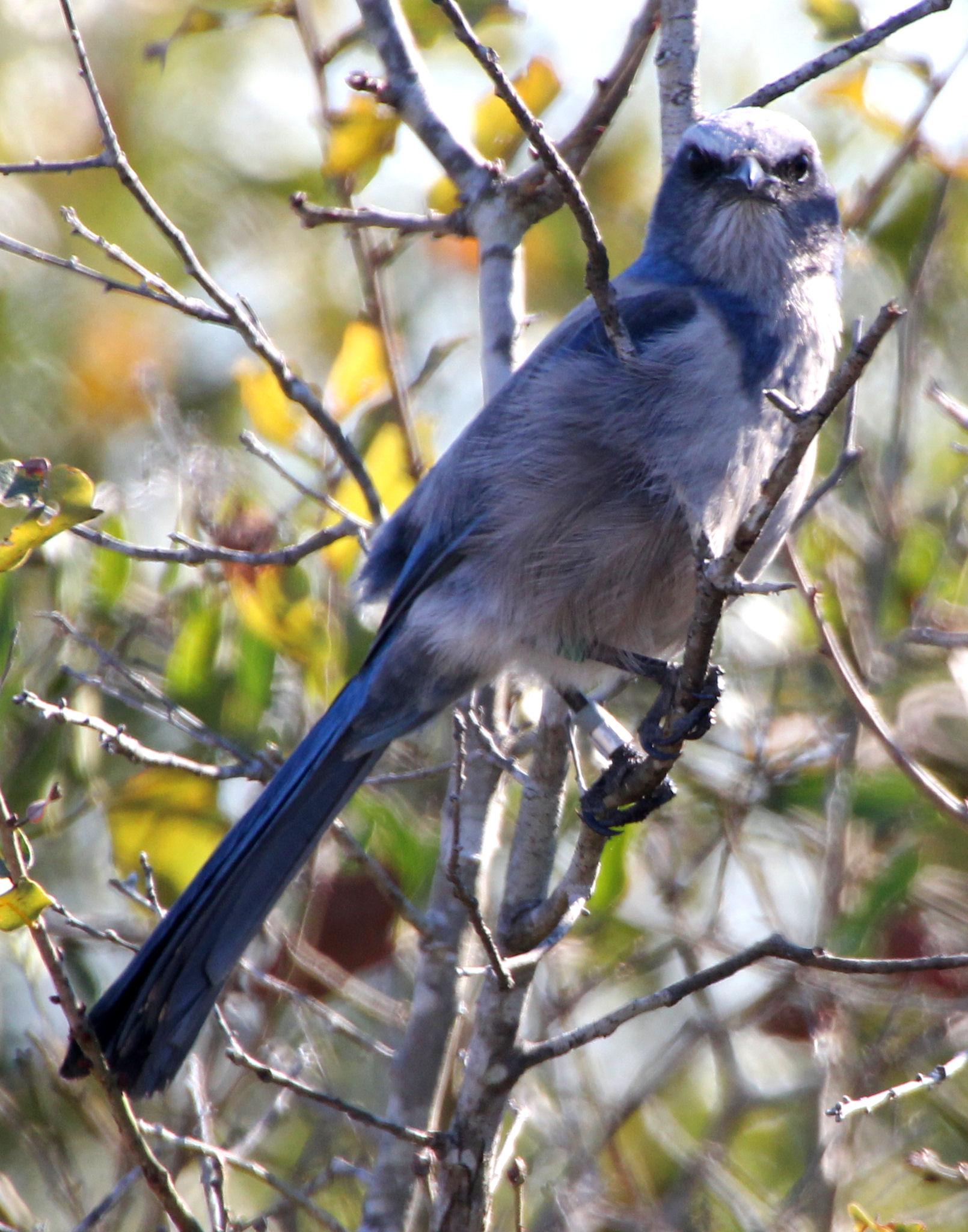 Florida backyard birds pictures # Birdhouse Plans For Florida Birds - Multi Bunk Bed